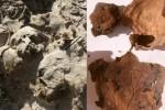 Temuan mumi Mesir dengan pembuluh otak (livescience.com)