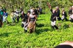 Sejumlah warga yang memerankan gerombolan berandalan berusaha menculik istri Pisang Sanjaya dalam tradisi Cing Cing Goling. Foto diambil Senin (18/8/2014). (JIBI/Harian Jogja/David Kurniawan)