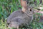 KISAH UNIK :  Ups, Memelihara Kelinci di Queensland Bisa Dipenjara 6 Bulan!