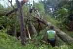 Anggota Polsek Karanggede dan anggota Dalmas Polres Boyolali melakukan Karya Bakti dengan memotong pohon yang roboh di sekitar salah satu rumah warga di Desa Sendang, Kecamatan Karanggede, Boyolali, yang terkena dampak angin ribut, Sabtu (8/11/2014). (Irawan Sapto Adhi/JIBI/Solopos)