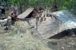 Salah seorang warga RT 002/RW 003, Desa Sendang, Kecamatan Karanggede, Boyolali, Painem, 50, tengah merapikan sisa bangunan rumahnya yang roboh terhampas angin ribut, Sabtu (8/11/2014). Menurut dia, sebagian besar warga membutuhkan bantuan dalam bentuk material bangunan. (Irawan Sapto Adi/JIBI/Solopos)