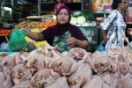 Suwarti, 55, pedagang ayam potong menggelar dagangannya di los tengah Pasar Gede, Solo, Jawa Tengah, Rabu (19/11/2014). Harga ayam potong saat ini stabil Rp27.000 untuk setiap kilogram meskipun harga bahan bakar minyak (BBM) telah naik yang sangat berpengaruh terhadap sektor transportasi. (Sunaryo Haryo Bayu/JIBI/Solopos)
