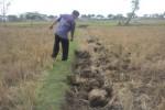 Warga melihat lokasi temuan benda diduga tembikar, tulang dan logam di areal persawahan Kelurahan Mandan, Kecamatan Sukoharjo, Kamis (13/11/2014). (Iskandar/JIBI/Solopos)