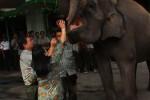 Usai merayakan HUT ke 61 GLZoo, para pengelola memberikan makan kepada dua gajah koleksi kebun binatang tersebut, Senin (10/11/2014). (Foto dokumen)
