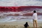 Ombak berwarna merah muncul di pesisir pantai Shenzhen (express.co.uk)