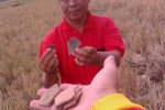 Warga Kelurahan Joho, Kecamatan Sukoharjo, Antonius Bimo Wijanarko, Minggu (9/11/2014), menunjukkan beberapa pecahan tembikar yang berserakan di areal persawahan desa tersebut. Areal persawahan itu kerap jadi lokasi perburuan benda-benda kuno. (Aries Susanto/JIBI/Solopos)