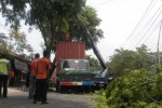 Sebuah truk trailer tersangkut pohon saat melintas di Jl. Urip Sumoharjo, Karanganyar, Jumat (7/11/2014). Kejadian tersebut sempat mengganggu arus lalu lintas di ruas Jl. Urip Sumoharjo, karena harus ditutup sementara selama masa evakuasi truk. (Bayu Jatmiko/JIBI/Solopos)