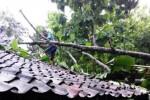 Seorang warga berusaha memotong dahan pohon jati yang roboh dan menimpa atap rumah milik Suwarto warga Dukuh Karangmunggur RT 006/RW 007, Desa Kaligayam, Kecamatan Wedi, Sabtu (27/12/2014). Pohon itu roboh akibat angin kencang yang melanda wilayah itu. (JIBI/Solopos/Istimewa)