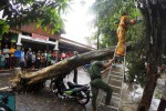 FOTO CUACA BURUK : Hujan Deras, Pohon di Depok Tumbang