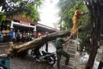 Petugas gabungan Badan Penanggulangan Bencana Daerah (BPBD), Dinas Kebersihan dan Pertamanan (DKP), aktivis RAPI, personel Linmas dan warga bergotong royong menyingkirkan pohon yang tumbang di sebelah selatan Taman Pasar Burung Depok, Manahan, Solo, Jawa Tengah yang menimpa sepeda motor Honda Astrea Supra AD 3342 U, Sabtu (6/12/2014). Pohon tersebut tumbang skibat hujan deras yang melanda Kota Solo selama kurang lebih dua jam. (Sunaryo Haryo Bayu/JIBI/Solopos)