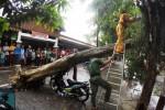 Petugas gabungan BPBD, DKP, RAPI, Linmas dan warga bergotong royong menyingkirkan pohon yang tumbang di sebelah selatan Taman Pasar Burung, Depok, Manahan, Solo, Jawa Tengah, Sabtu (6/12/2014). Pohon yang tumbang akibat hujan deras selama kurang lebih dua jam itu yang menimpa sepeda motor Honda Astrea Supra AD 3342 U. (Sunaryo Haryo Bayu/JIBI/Solopos)