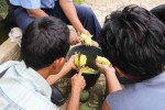 Para petani membuat agen hayati di Dusun Ngawis II, Desa Ngawis, Kecamatan Karangmojo, Senin (15/12/2014). (Harian Jogja/Kusnul Isti Qomah)