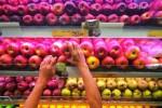 Pekerja merapikan buah apel di salah satu toko buah di Jakarta, Kamis (22/1/2015). Kasus tercemarnya apel oleh bakteri Listeria di Amerika Serikat yang menewaskan tiga orang sehingga masyarakat Indonesia perlu mewaspadainya. (JIBI/Solopos/Antara/Zabur Karuru)