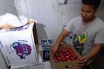 Pedagang menyortir buah apel impor asal Amerika Serikat di kamar pendingin Pasar Induk Tanah Tinggi, Tangerang, Banten, Senin (26/1/2015). Dampak adanya infromasi apel impor dari Amerika Serikat yang terkena bakteri listeria (listeriosis), pedagang impor apel di pasar induk tanah tinggi mengaku mengalami penurunan pemesanan hingga 30% dari biasanya. (JIBI/Solopos/Antara/Lucky R.)