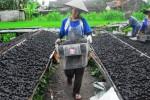 Pengeringan briket batu bara di Sleman, Rabu (21/1/2015). (Juli Nugroho/JIBI/Bisnis)