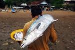 Mengapa Ikan di Laut Selatan Saat Ini Melimpah?