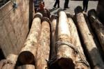Ilustrasi kayu ilegal (JIBI/Solopos/Antara/Andreas Fitri Atmoko)