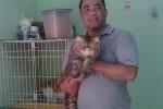 Nanang Setyo Hadi Nugroho, Warga Kecamatan Taman, Kota Madiun pecinta kucing. (JIBI/Solopos/Aries Susanto)