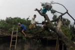 Warga menyingkirkan pohon tumbang yang menimpa rumah Wagini, warga Dusun Cabean, Desa Mlese, Kecamatan Cawas, Kabupaten Klaten, Jawa Tengah, Selasa (24/2/2015). (Ayu Abriyani K.P./JIBI/Solopos)