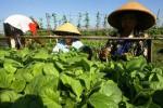 Buruh tani menyemai bibit tembakau untuk dipindahkan ke kebun. (Sunaryo Haryo Bayu/JIBI/Solopos)