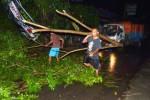 Pohon tumbang akibat angin kencang Madiun, Senin (16/2/2015) malam. (JIBI/Solopos/Antara/Siswowidodo)