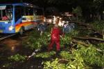 Pohon tumbang akibat angin kencang Solo di Kleco, Senin (16/2/2015). (Ivanovich Aldino/JIBI/Solopos)