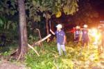 Pohon tumbang akibat angin kencang Solo di Jebres, Senin (16/2/2015). (Sunaryo Haryo Bayu/JIBI/Solopos)