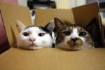 Kucing di kardus (Breathefreelitterboxmate.com)