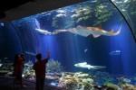 Jaya Ancol Resmi Berpisah dari Sea World