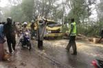 Mobil yang tertimpa pohon di Gunungkidul. (Kusnul Isti Qomah/JIBI/Harian Jogja)
