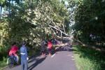 Jalan Kelor Ngipak, Karangmojo, Gunungkidul, lokasi pohon jati yang tumbang dan menimpa dua pelajar yang tengah melintas. (JIBI/Harian Jogja/dok. Polsek Karangmojo)