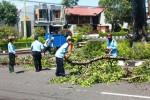 Petugas Memotong ranting pohon di Jalan Sumarawi, Wonosari, Rabu (26/2/2015). (David Kurniawan/JIBI/Harian Jogja)