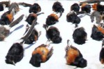 Bankai burung selundupan. (JIBI/Solopos/Antara/Sahlan Kurniawan)