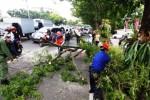 Personel BPBD Kota Solo menyingkirkan dahan pohon dari jalan, Rabu (18/3/2015). (Ivanovich Aldino/JIBI/Solopos)