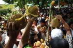 Puluhan warga berebut durian merah saat digelar Festival Buah Lokal di Banyuwangi, Sabtu (28/3/2015). (JIBI/Solopos/Antara/Saiful Bahri)