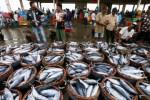 KOMODITAS HASIL LAUT : Nelayan Cilacap Diminta Maksmimalkan TPI