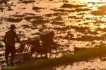 FOTO PETANI MADIUN : Berat, Tantangan Pertanian Hadapi MEA