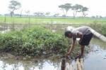 Ketua RT 001/RW 010 Dukuh Karnosari, Kelurahan Sukoharjo, Kecamatan Sukoharjo, Paridi, mengambil ranting di Kali Langsur, Senin (2/3/2015). Normalisasi Kali Langsur tak kunjung terealisasi, meski warga terdampak banjir sudah mengeluhkan hal ini. (Okkie Pritha Cahyani/JIBI/Solopos)