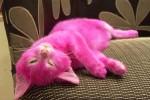Kucingberwarna pink (Metro.co.uk)