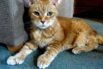 Natasha, Kucing pemilik 24 jari kaki (Mirror.co.uk)