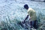 Petani di Desa Pungsari, Kecamatan Plupuh, Dikin, memanen tanaman padi miliknya yang roboh akibat terjangan angin dan hujan, Selasa (3/3/2015). (Abdul Jalil/JIBI/Solopos)