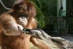 Suriya memberi makan pinguin (News.com.au)