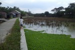 Anak kecil berjalan di pinggir sawah di dekat Kali Langsur, Dukuh Karnosari, Kelurahan Sukoharjo, Kecamatan Sukoharjo, Selasa (3/3/2015). Sawah di dekat Kali Langsur kerap tergenang banjir. (Okkie Prita Cahyani/JIBI/Solopos)
