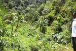 Sekretaris Desa Anggrasmanis, Sutarno, berdiri di jalur menuju air terjun Ringin Jenggot, belum lama ini. Air terjun tersebut merupakan salah satu potensi objek wisata di desa tersebut. (Bayu Jatmiko Adi /JIBI/Solopos)