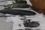 Kapak batu sentani (JIBI/Solopos/Antara)