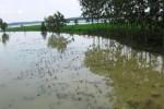 Suasana persawahan Kecamatan Kemusu, Boyolali pada Minggu (26/4) siang. Sebagian besar areal persawahan tergenang luapan Waduk Kedung Ombo. (Kharisma Dhita Retnosari/JIBI/Solopos)