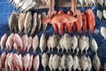 KEKERINGAN GUNUNGKIDUL : Telaga Mengering, Warga Berebut Mencari Ikan