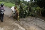 Jalan Siluk-Kretek Bantul yang ambles. (Arief Junianto/JIBI/Harian Jogja)