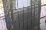 Orang utan yang dievakuasi dari rumah warga Kudus dititipkan ke WGM (Muh Ismail/JIBI/Solopos)