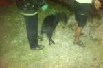 Warga Jagalan Jebres mengerahkan anjing peliharaan mereka untuk melacak keberadaan babi ngepet di wilayah itu. Senin (18/5/2015) malam warga Jagalan berhamburan menyusul isu babi ngepet di wilayah itu. (Oriza Vilosa/JIBI/Solopos TV)